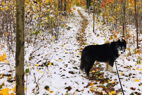 Ice Age Trail Alliance, Ice Age National Scenic Trail, Parrish Hills Segment, Langlade County, Dog, Dog on Leash, Snow