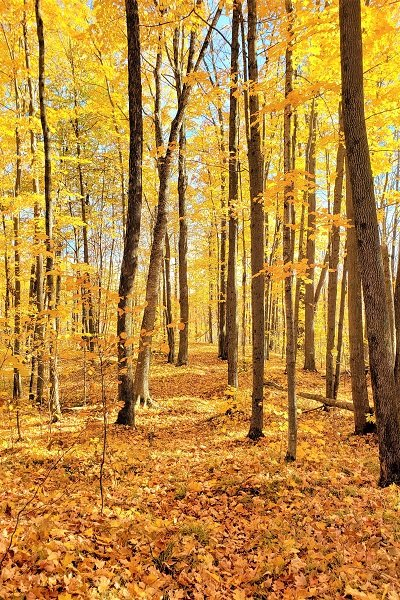 Ice Age Trail Alliance, Ice Age National Scenic Trail, Ice Age Trail, Mammoth Hike Challenge, Fall Colors Hikes
