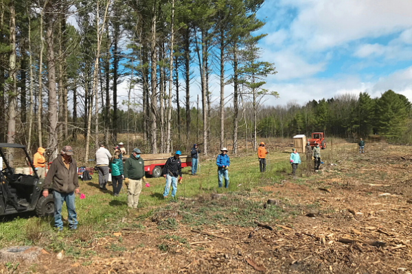 An image of volunteers getting ready to plant trees. They line up before the area where the trees will be planted, holding red flags that will be used to mark newly planted trees. Pine trees tower above them in the background, before partially cloudy skies.