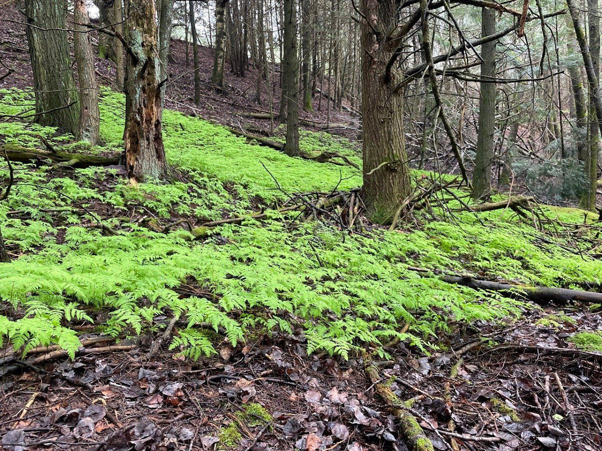 Help Protect Land in Langlade County (5)