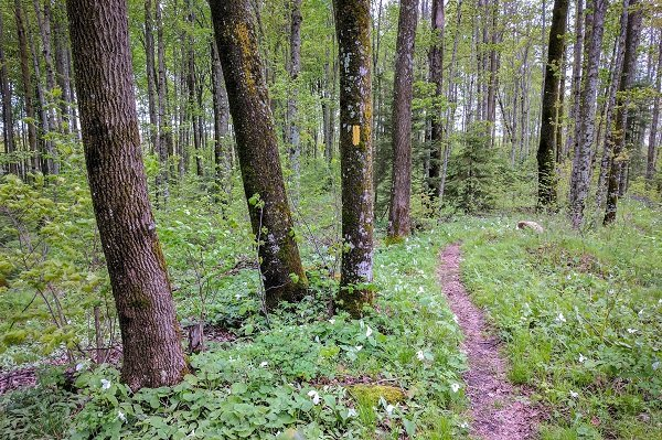 National Trail Day, Ice Age Trail Alliance, Ice Age National Scenic Trail