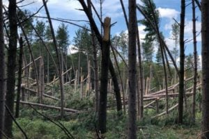 Ice Age Trail Alliance, Ice Age National Scenic Trail, Volunteer Chapters, Trail Conditions, Storm Damage