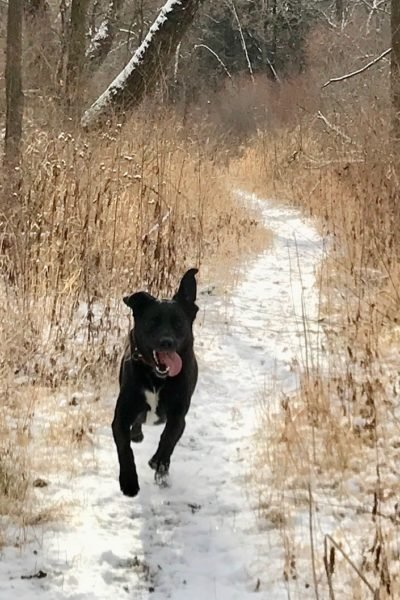 Ice Age Trail Alliance, Ice Age National Scenic Trail, Dog off Leash, Storrs Lake Segment, Rock County